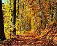 Lqwx Foto Tapete Mit Blättern Der Mountain Road Anfang Herbst Wald 3D-Hintergrund Wanddekoration Tapete-430 Cmx 300Cm
