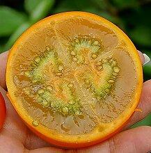 Lulo | Naranjilla | Seltene tropische Pflanze