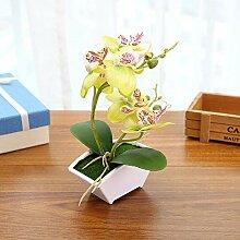 LUOXIRZZW Phalaenopsis Bonsai Doppelgabel kreative
