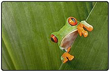 LUPINZ Teppich für Papageien und Tropische