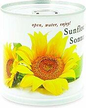 MacFlowers Sonnenblume - Blumen in der Dose