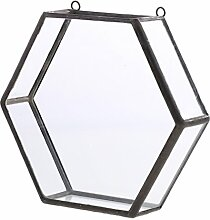 MagiDeal Glas geometrische Terrarium Box Sukkulent