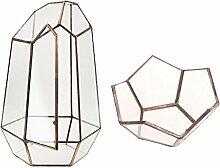 MagiDeal Irreguläre + Lotus Mini Glas Terrarium