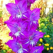 Magische Zierpflanze,Ideal für