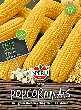 Maissamen - Mais (Popcornmais) Nana von Sperli-Samen