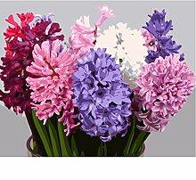 Malen Nach Zahlen Bunte Hyazinthen Blumen Acryl