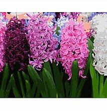 Malen Nach Zahlen Bunte Hyazinthen In Blüte