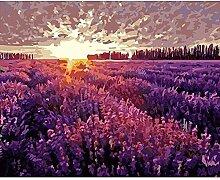 Malen Nach Zahlen Lavendelgarten Sonnenuntergang