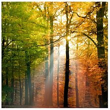 mantiburi Vlies FotoTapete Morning Light Wald