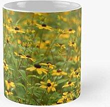 marbeian Susan Eyed Yellow Black Nature Echinacea