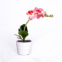 Matefield Solarbetriebene Orchideen-Lampe mit 3