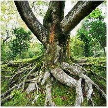 Matt Fototapete Alter Baum 3,36 m x 336 cm East
