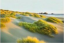 Matt Fototapete Dünen und Gräser am Meer 2,9 m x