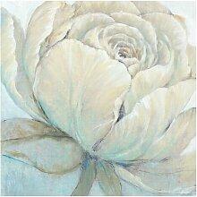 Matt Fototapete Englische Rose Pastell 3,36 m x