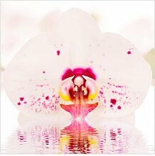 Matt Fototapete Gepunktete Orchidee auf Wasser 2,4