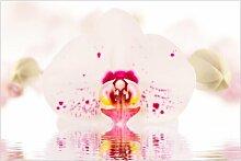 Matt Fototapete Gepunktete Orchidee auf Wasser 3,2