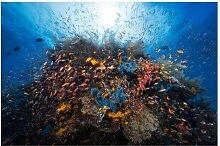Matt Fototapete Lagune mit Fischen 1,9 m x 288 cm