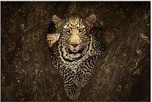 Matt Fototapete Leopard ruht auf einem Baum 2,55 m