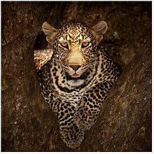 Matt Fototapete Leopard Ruht auf einem Baum 3,36 m