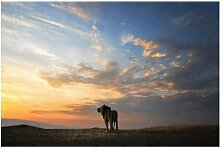 Matt Fototapete Löwe im Sonnenuntergang 1,9 m x