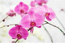 Matt Fototapete Nahaufnahme Orchidee 2,25 m x 336