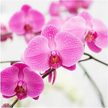 Matt Fototapete Nahaufnahme Orchidee 2,4 m x 240