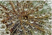 Matt Fototapete Pusteblume im Herbst 2,55 m x 384