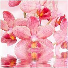 Matt Fototapete Rosa Orchideen auf Wasser 2,4 m x