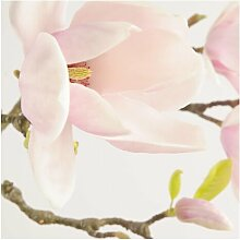 Matt Fototapete Royal Magnolia 1,92 m x 192 cm