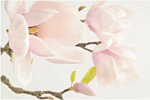 Matt Fototapete Royal Magnolia 3,2 m x 480 cm East