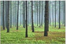 Matt Fototapete Tiefer Wald mit Kiefern auf La