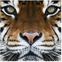 Matt Fototapete Tiger Eyes 1,92 m x 192 cm East