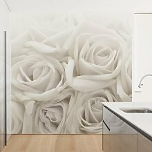 Matt Fototapete Weiße Rosen 2,4 m x 240 cm