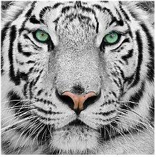 Matt Fototapete Weißer Tiger 3,36 m x 336 cm East