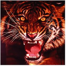 Matt Fototapete Wilder Tiger 2,4 m x 240 cm East