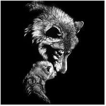 Matt Fototapete Wolf vor Schwarz 1,92 m x 192 cm