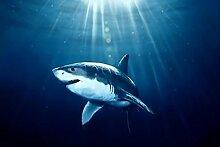 Meeresboden Hai Diamant Malerei 5D DIY Voll Bohren