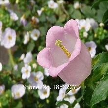 Mehrfarbig: Bonsai Fingerhut Samen 100 Stücke 10