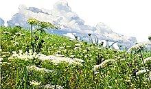 Mehrjährige Wildblumenkombination