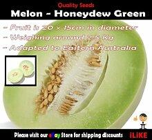 Melon Honigtau Grün 15 Samen Mindestgemüsegarten