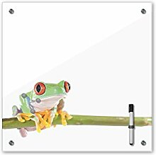 Memoboard 40 x 40 cm, Tiere - Rotaugenlaubfrosch -