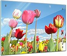 Memoboard 80 x 60 cm, Pflanzen - Bunte Tulpen -