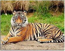 Menddy Bilder Tiger Zeichnung Nach Zahlen Acryl