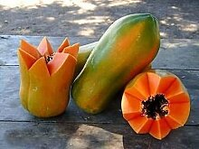 Meradol Miradol Rot Karibik Sonnenaufgang Papaya