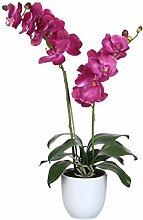 Mica decorations 950162-T Kunstblume -und Pflanze, Orchidee Phalaenopsis Höhe 66 cm, Durchmesser 38 cm violett im Übertopf Tusca, weiß Keramik