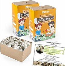 Mini Anzucht-Set Pilze von Paris Bio durch 2