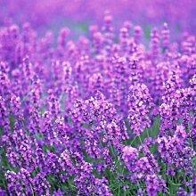 Mini kšnnen Blumen Pflanzensamen Amt