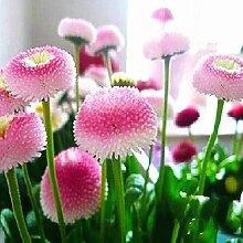 Mischblumenpflanzensamen schön blühende Pflanze Bonsai 100% real Samen Vier Jahreszeiten Blumensamen Sonnenblume Lavendel Rose