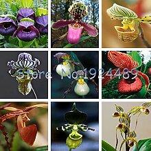 Mix: 100 Stücke 24 Farbvarianten Cypripedium