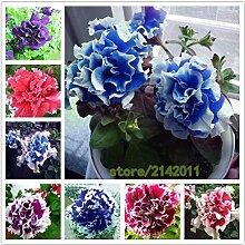 Mix: 100 Teile/beutel Blau Petunia Samen, Blumen